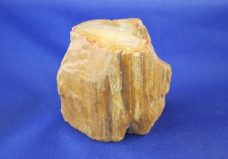 Petrified wood 1921 (3)