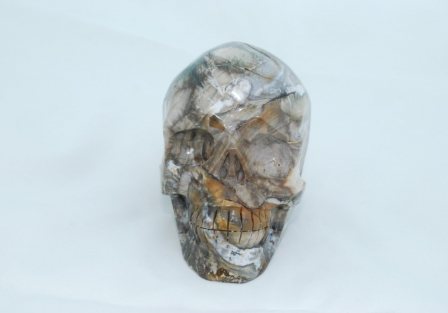 Petrified Wood Skull